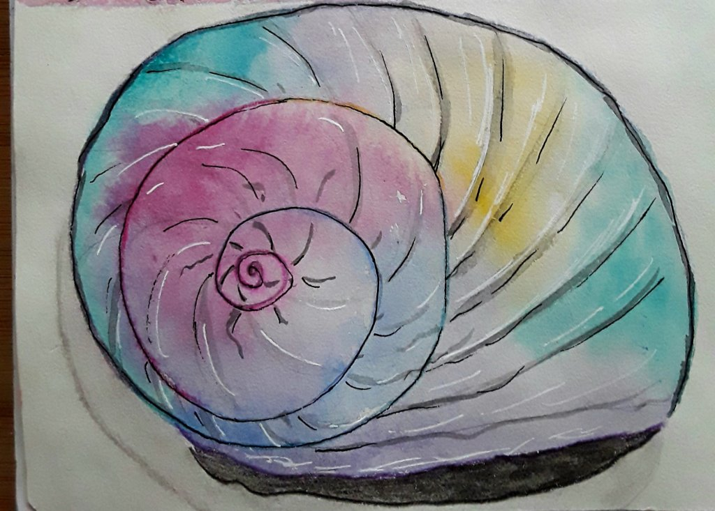 Seashells prompt for doodlewash Jan 5th.I painted a giant moonsnail shell my hubby found for me. It