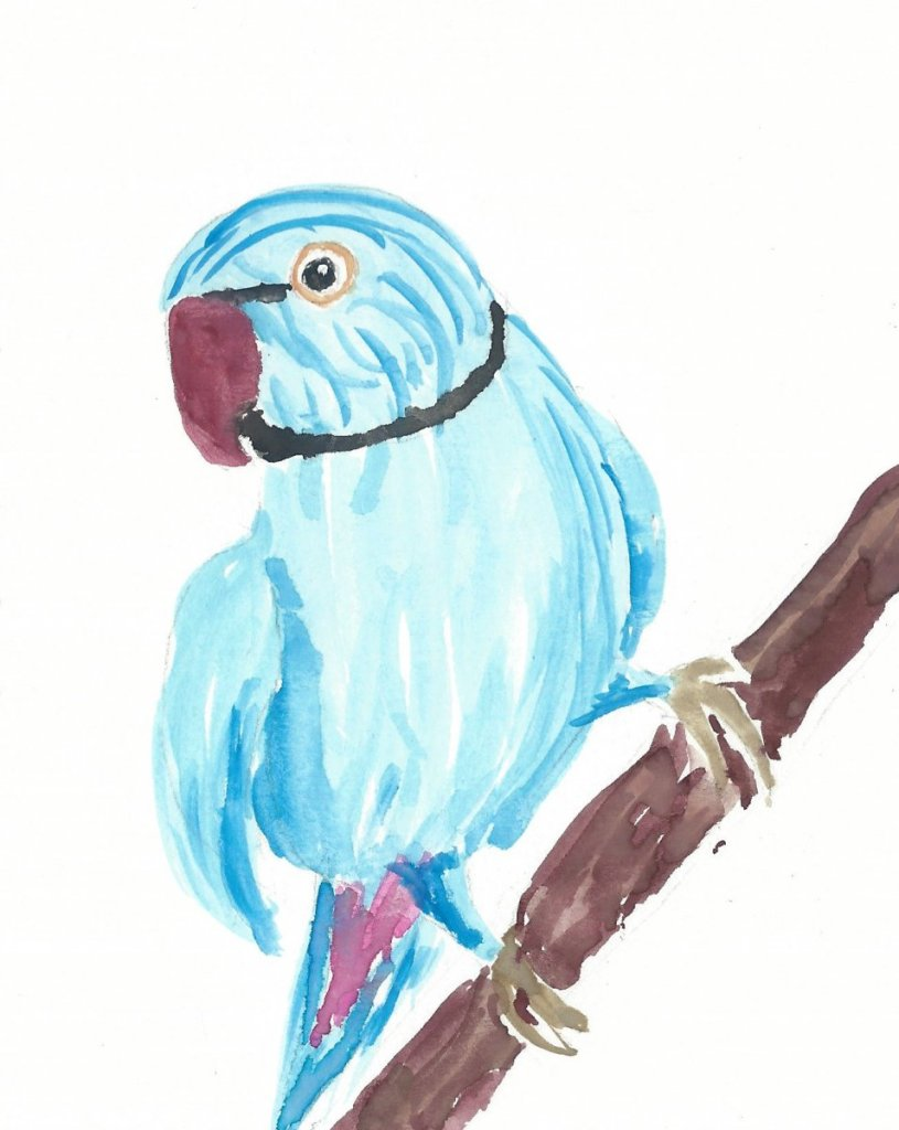 A parrot for my sister's birthday Blue Parrot