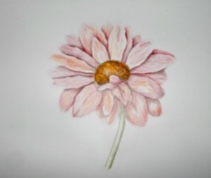 The same Daisy, a new drawing and coloured with watercolored pencils and a few dabs of water. this i