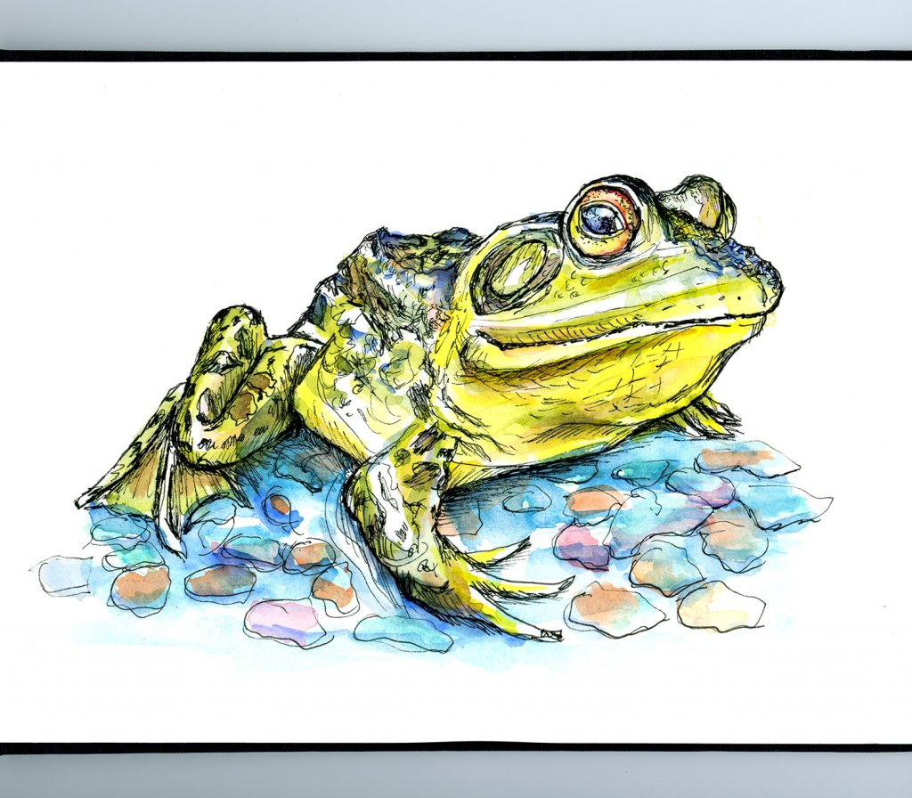 Frog Watercolor Painting Sketchbook Detail