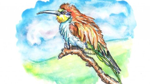 Bee-Eater Sky Clouds Watercolor Painting