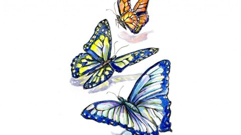 Colorful Butterflies Watercolor Illustration