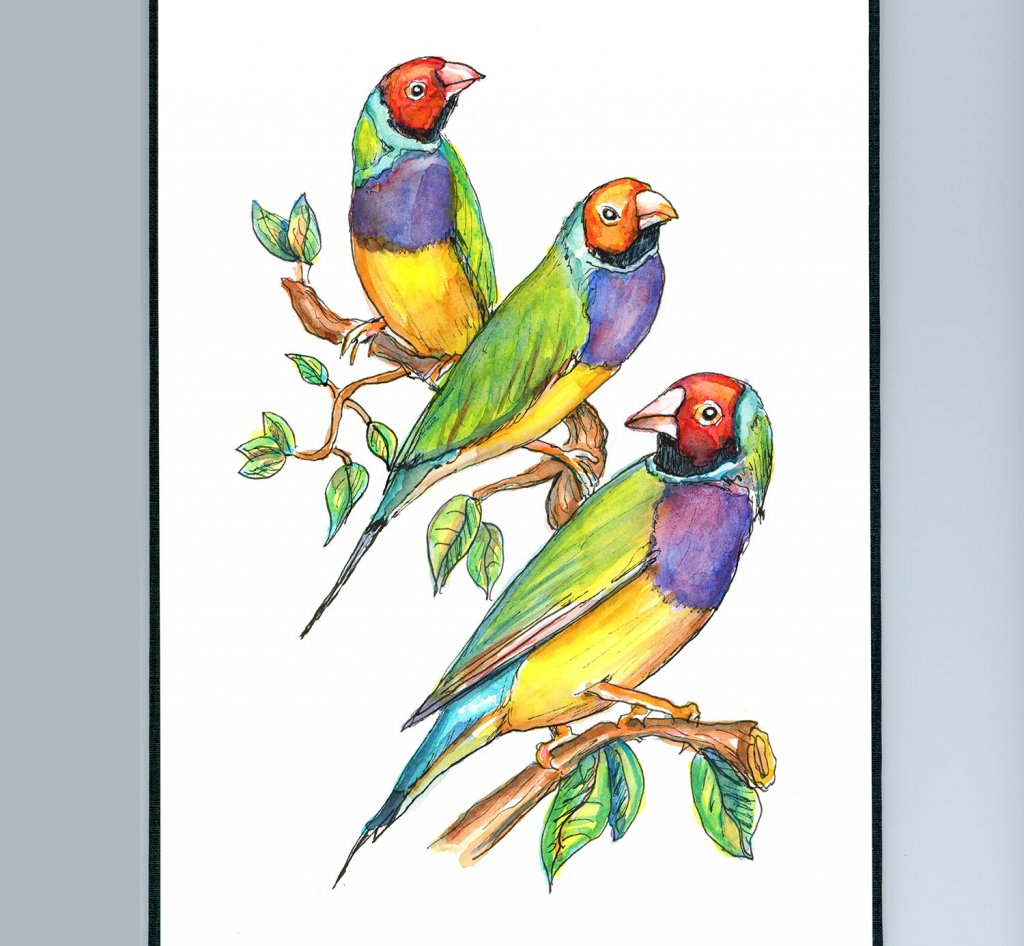 Rainbow Finch Gouldian Watercolor Illustration Sketchbook Detail