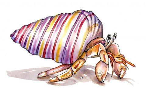 Hermit Crab Rainbow Seashell Watercolor Illustration