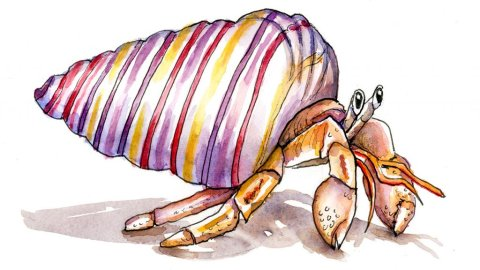 Hermit Crab Rainbow Seashell Watercolor Illustration