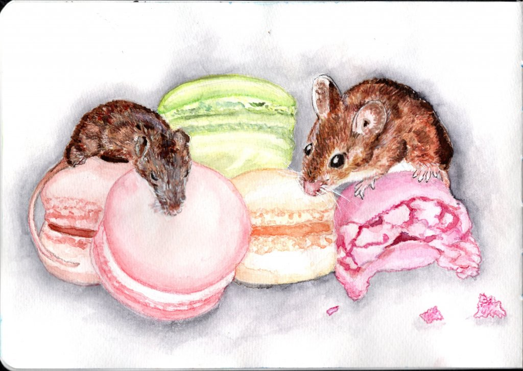 I don't have a story this time this time (thank goodness…? mice in macarons, eek…)