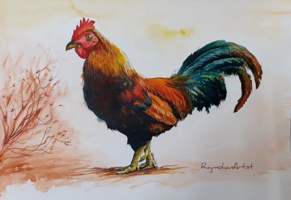 Watercolor from 2019 series.. #rajmohanartist #rooster #doodlewash Rooster