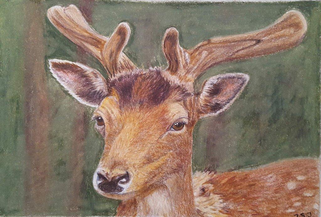 Reindeer Colored Pencil Painting by Judy Jones