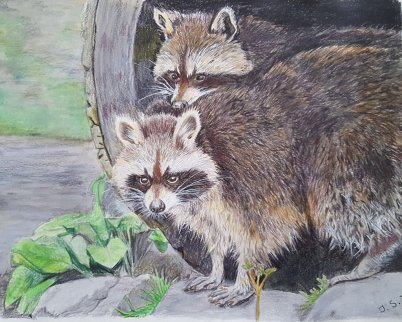 Raccoons Watercolor Pencil Painting by Judy Jones