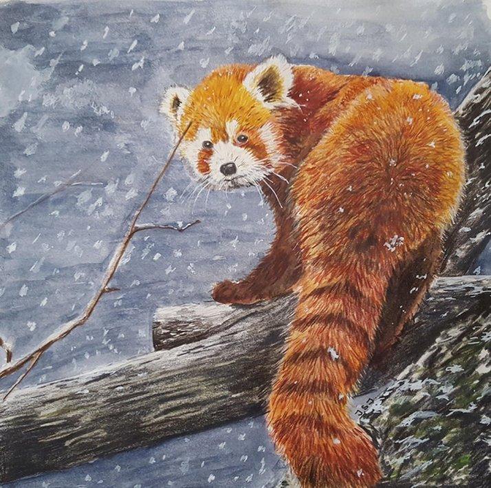 Red Panda Watercolor Painting