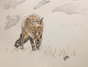 Couldn't sleep so I finished a Fox in the snow that I started yesterday. 19A3E767-9AFD-409C-B1F6-B