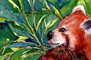 2!16!20 Red Panda 2.16.20 Red Panda img001