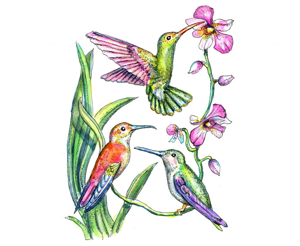 Hummingbirds Three Birds Watercolor Painting