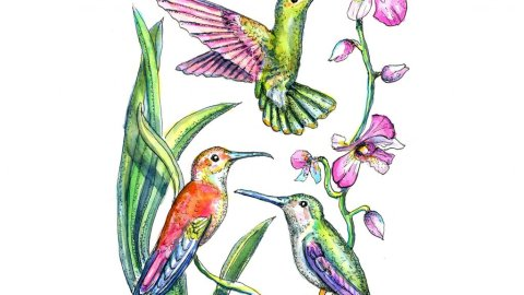 Hummingbirds Three Birds Watercolor Painting