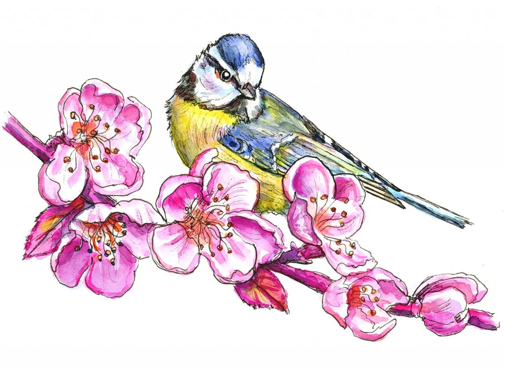 Cherry Blossoms And Blue Tit Watercolor Painting