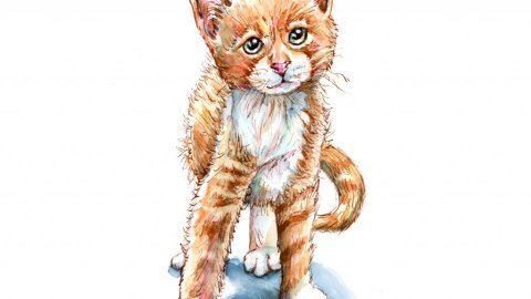 Kitten Tabby Cat Golden Orange Watercolor Painting