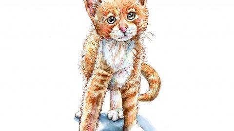 Kitten Tabby Cat Golden Orange Watercolor Painting