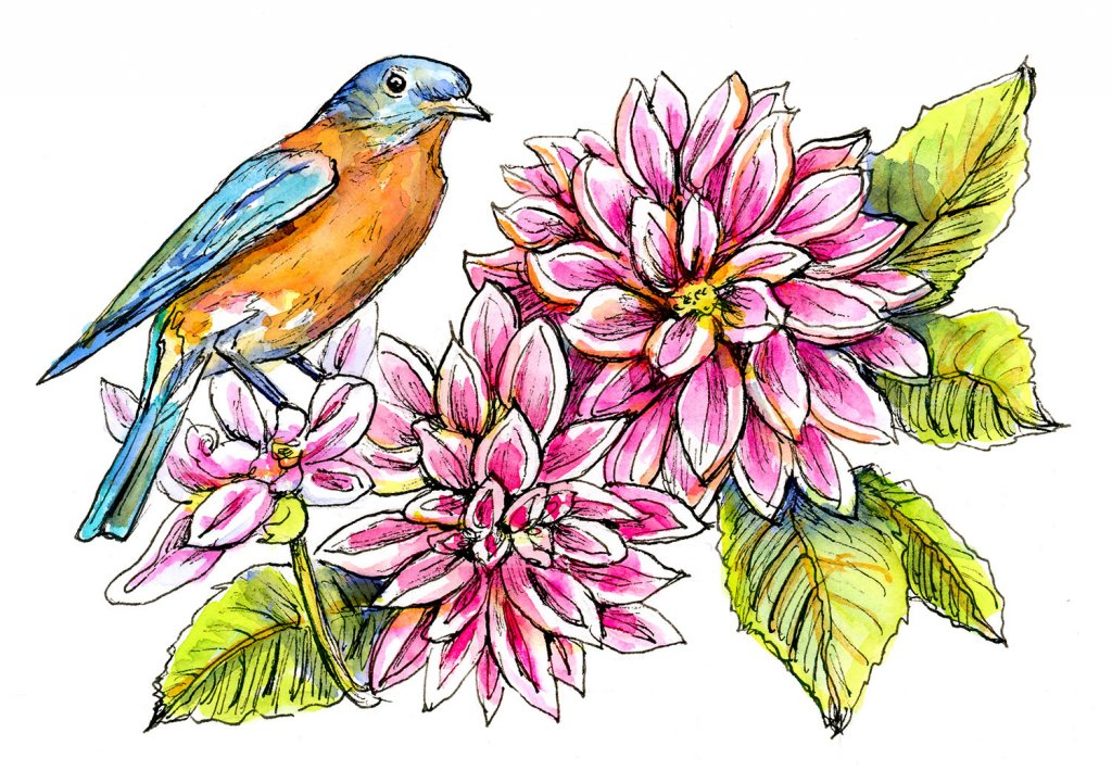 Bluebird Red And Pink Dahlia Watercolor Painting
