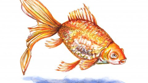 Goldfish Watercolor Sketch Painting Realistic