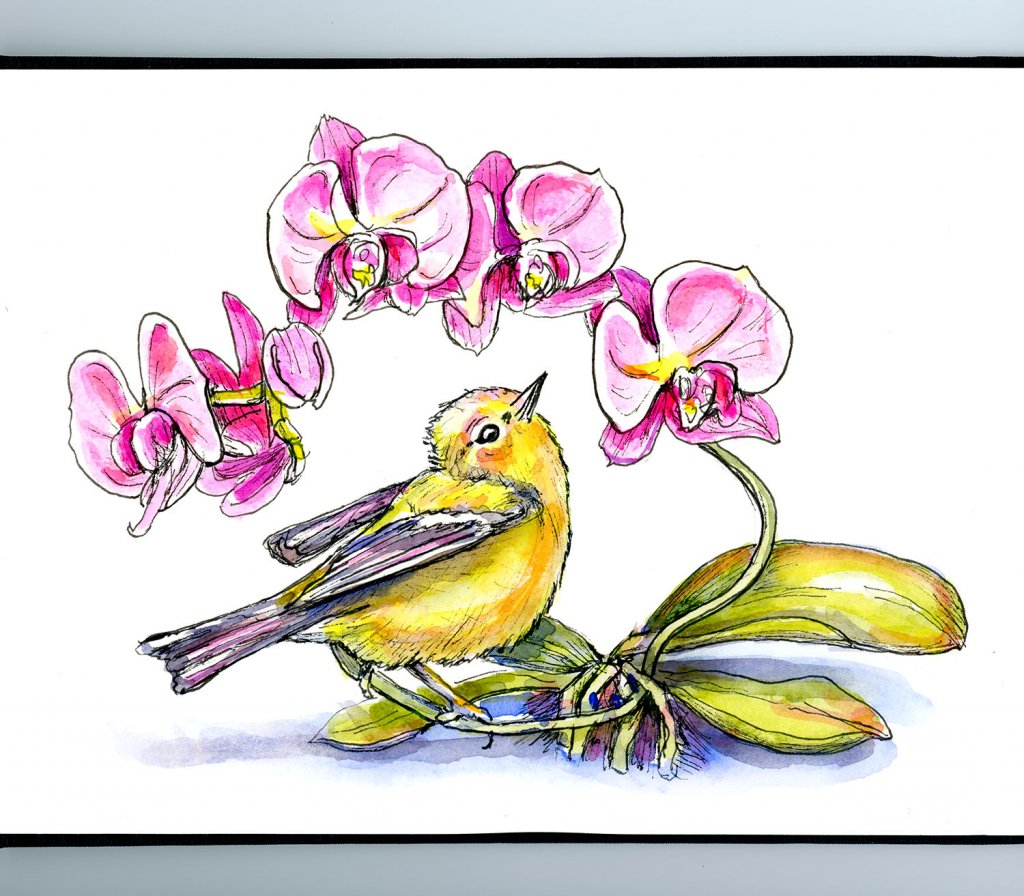 Orchids And Warbler Bird Watercolor Illustration Sketchbook Detail