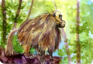 Gelada Baboon – #PostcardsForTheLunchBag Did you know that one of the fastest ways to tell an