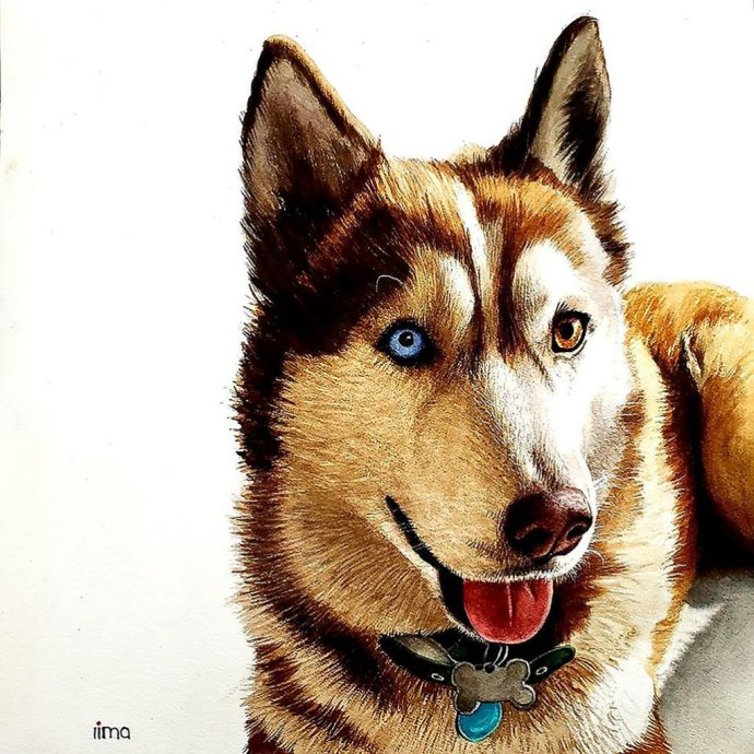 Husky Dog Watercolor Painting Realistic