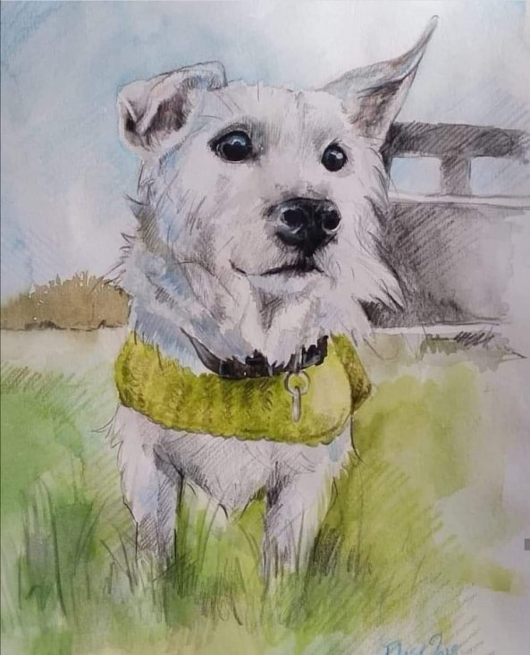 White Dog Watercolor Painting by Elise Richards