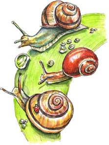snails watercolor painting illustration