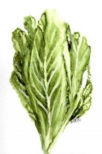 3/30/31 Lettuce 3.30.20 Lettuce img035
