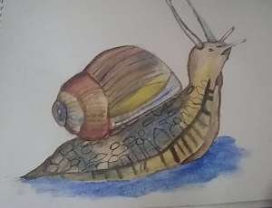 Snail 🐌 Sketch and watercolor painting #doodlewashmarch2020 #worldwatercolorgroup #watercolo