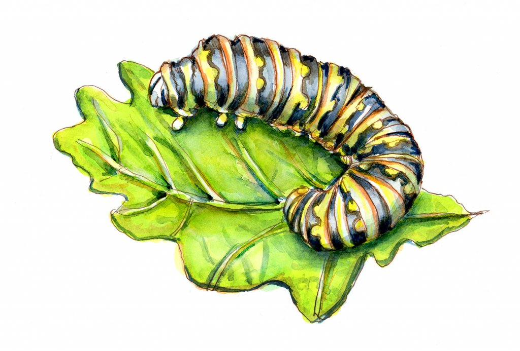 Caterpillar Watercolor Painting