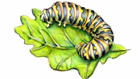 Caterpillar Watercolor Painting