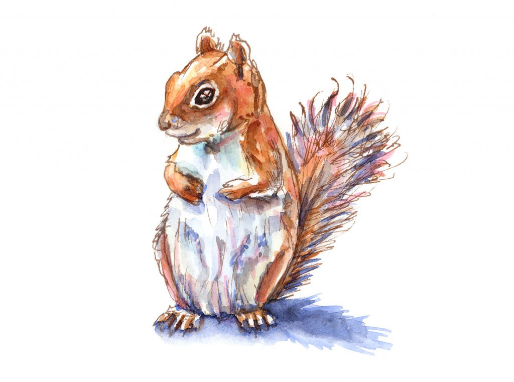 Brown Red Squirrel Watercolor Painting