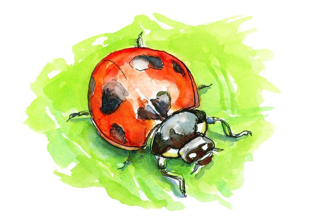 Ladybug Ladybird Beetle Watercolor Painting