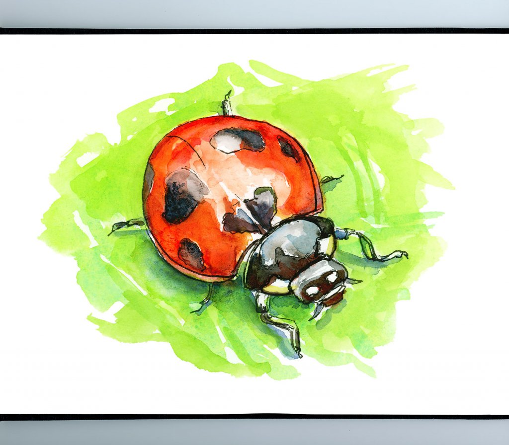 Ladybug Ladybird Beetle Watercolor Painting Sketchbook Detail