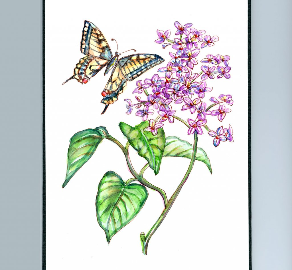 Butterfly And Lilac Flower Leaves Watercolor Illustration Sketchbook Detail