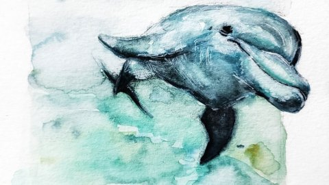 Dolphin Watercolor Painting by Jenny Tran