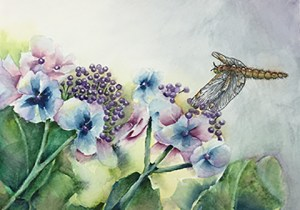 Dragonfly on Lacecap Hydrangea/Watercolor Dragonfly and Lacecap Hydrangea