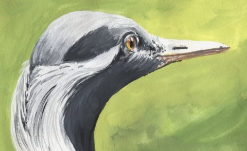 Grey Heron Watercolour Painting by Swetlana Fink