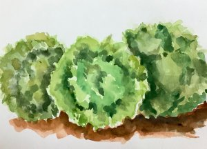 #doodlewashmarch2020 day 30 lettuce IMG_1714