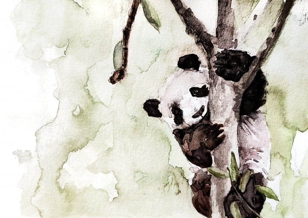 Panda Watercolor Painting by Jenny Tran