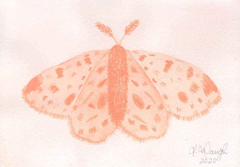 Monochromatic Moth moth