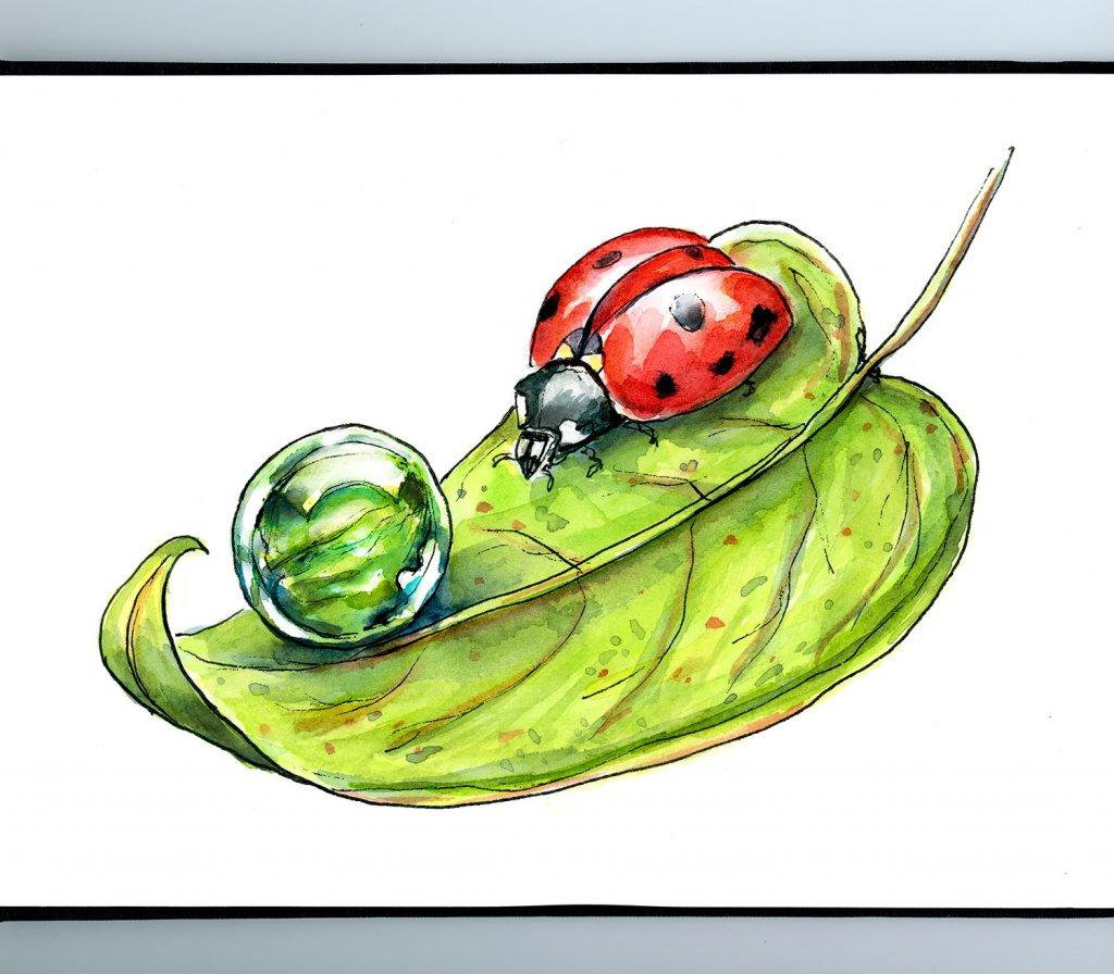 Ladybug Leaf Morning Dew Drop Watercolor Illustration Sketchbook Detail