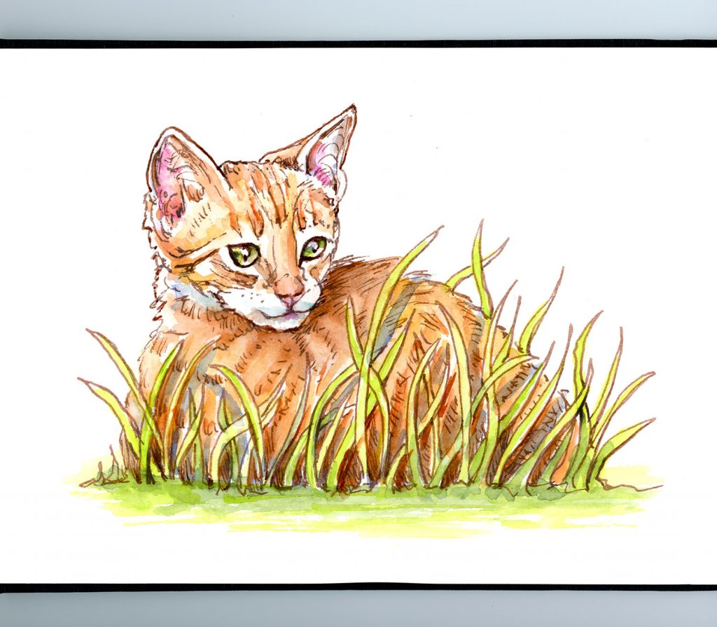 Cat Kitten Tabby In Grass Watercolor Illustration Sketchbook Detail