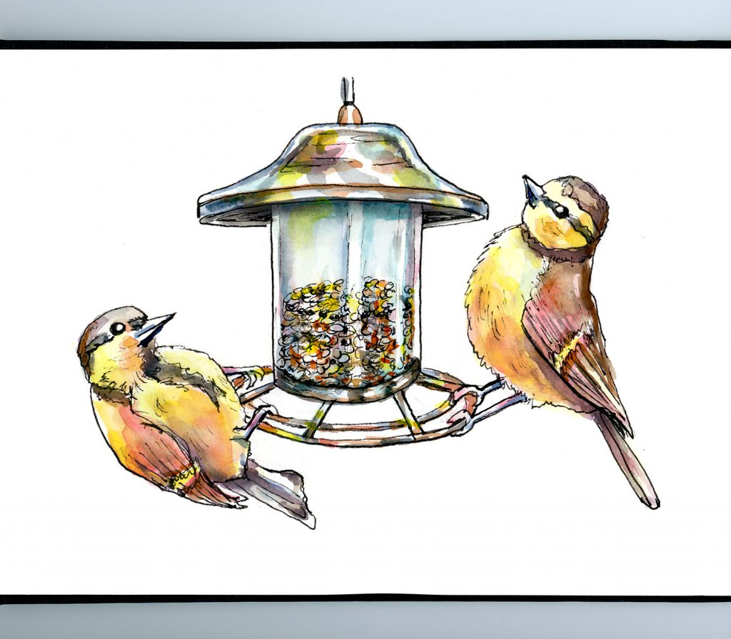 Draw A Bird Day 2020 Bird Feeder Watercolor Painting Sketchbook Detail