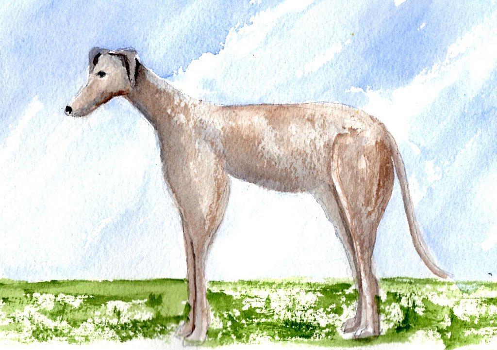 5/29/20 Greyhound 5.29.20 Greyhound img022