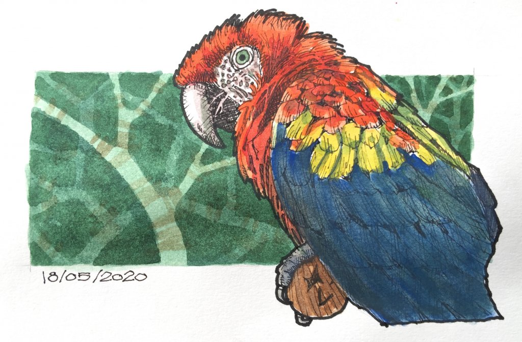 18/05/2020 Scarlet Macaw 6026242E-A8D6-4930-A931-BE2221BC2046