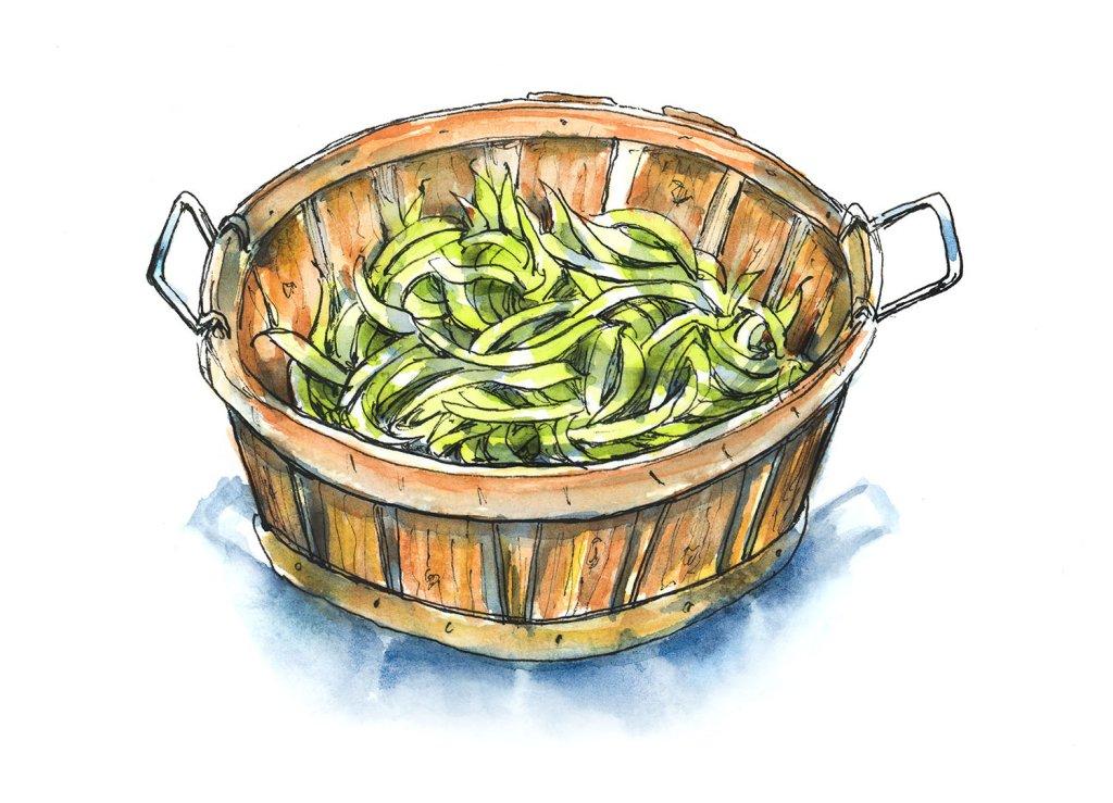 Green Beans Farm Wooden Bucket Watercolor Illustration
