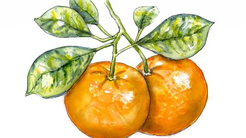 Tangerine Tree Watercolor Illustration