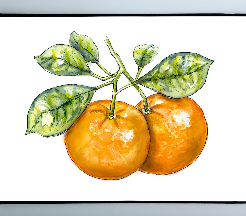Tangerine Tree Watercolor Illustration Sketchbook Detail